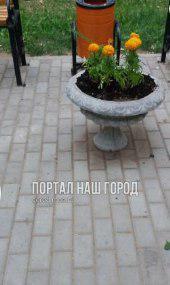 Цветы в клумбы высадили на 3-й Владимирской улице по просьбе жителя