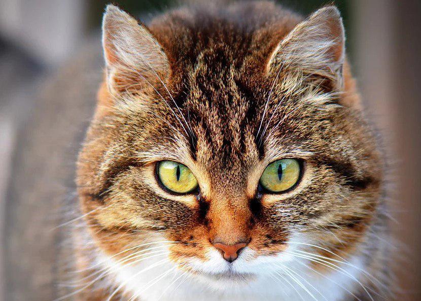 Выставка кошек заработает в парке «Сокольники»